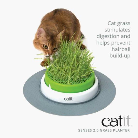 Cat Grass stimulates digestion and helps prevent hairball build-up