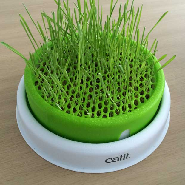 Senses 2 0 Grass Planter Getting Started Catit Uk