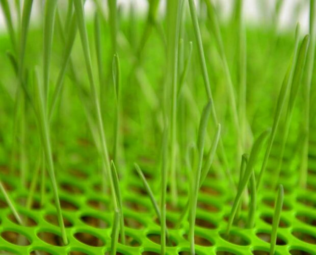 Grass sprouting from the Senses 2.0 Grass Planter