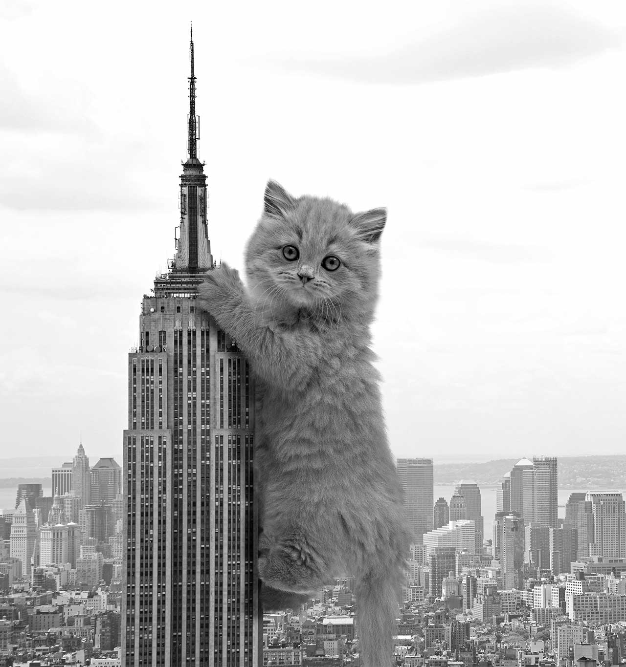 Cat hanging from the chrysler building