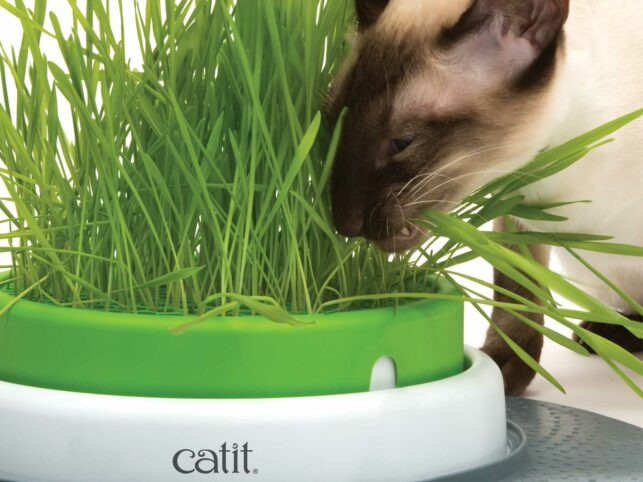 Cat eating grass from the Senses 2.0 Grass Planter