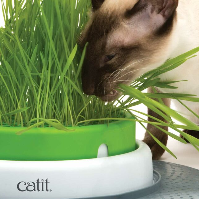Cat eating the grass planter