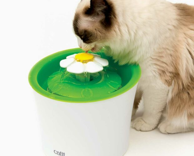 Cat drinking from a Catit flower fountain