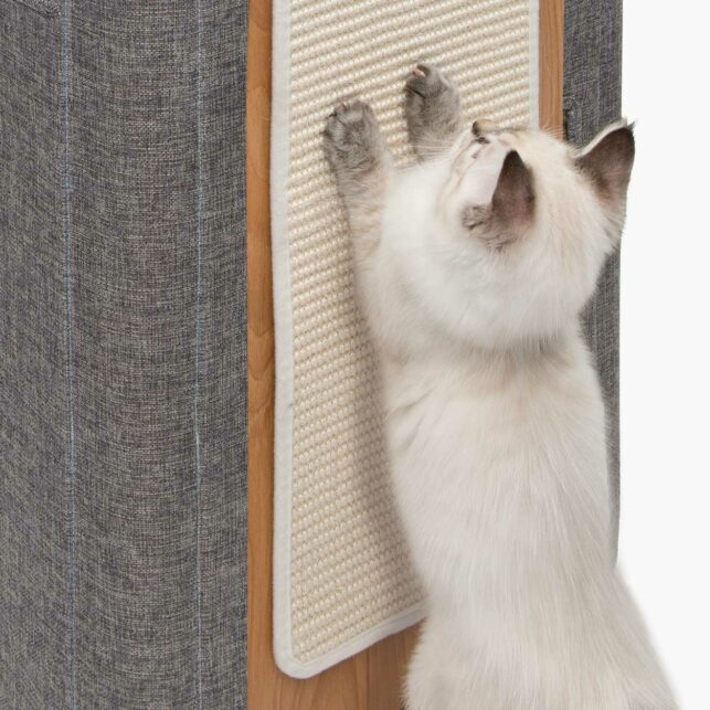 White cat scratching from a cubo tower