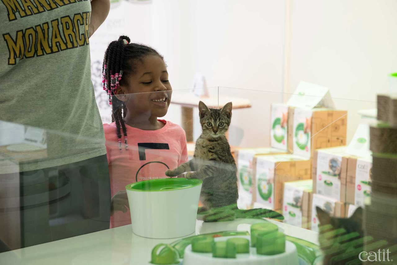 Cat in a tiny glass cage with a child looking at it