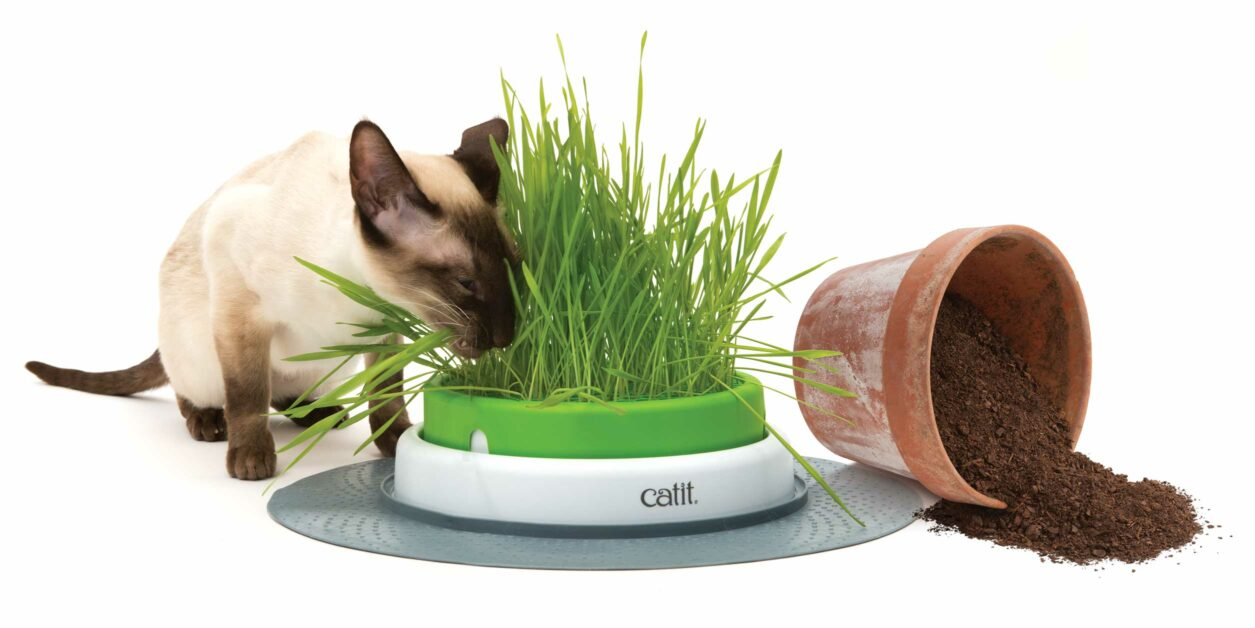 Grass planter being compared to a flower pot with soil being thrown over