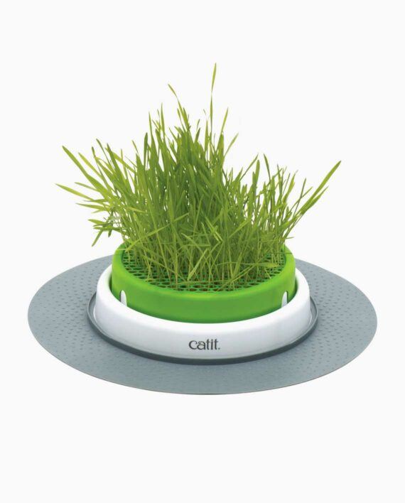 Grass planter standalone without a cat