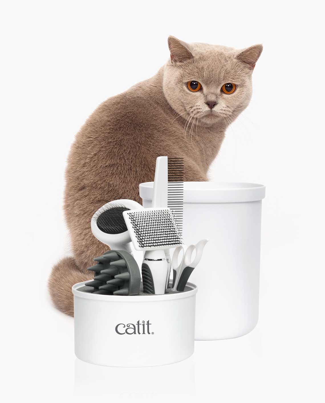 british shorthair cat looking at the grooming kit