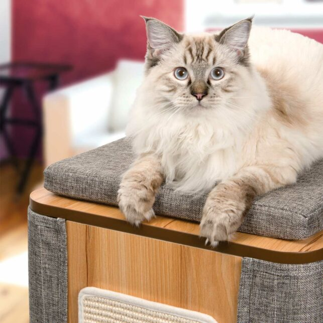 Longhaired cat sitting on the vesper cubo tower