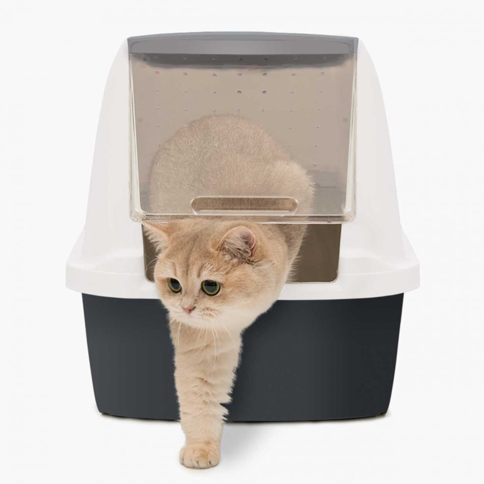 Cat crawling out of the litterbox