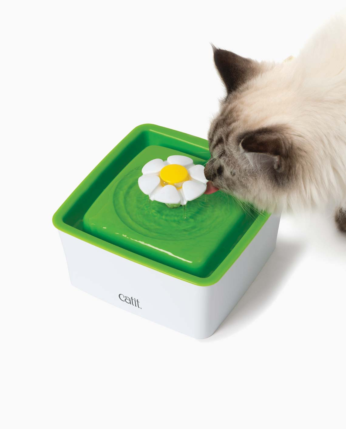 Cat drinking from a mini Catit flower fountain