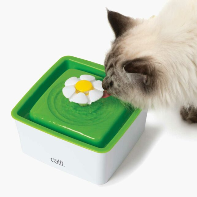 Cat drinking from the Catit mini flower fountain