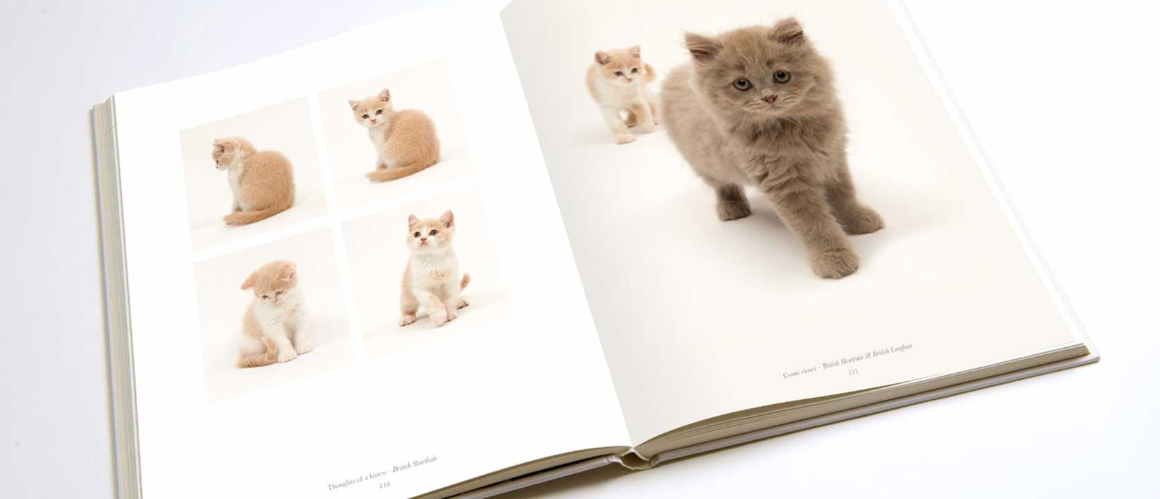 A page inside the Pure cat portrait book