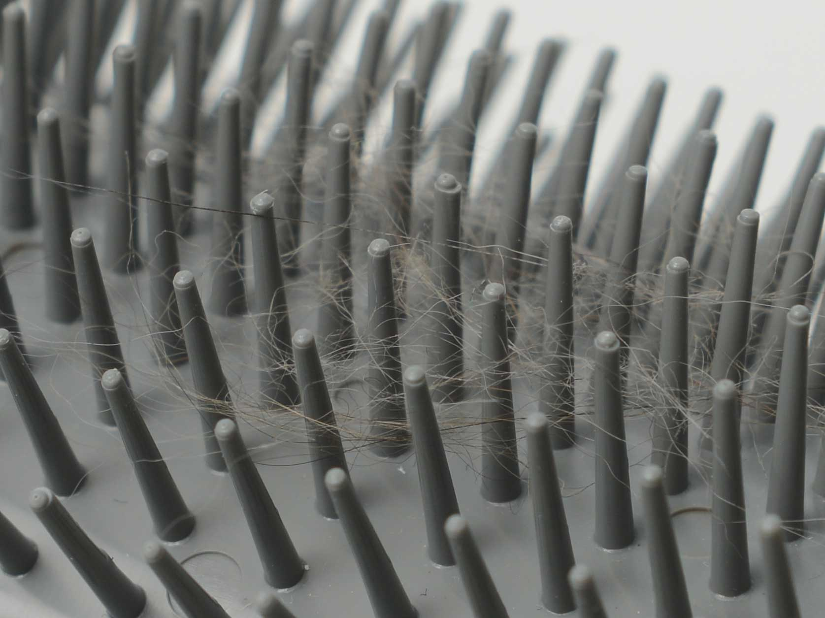 Close-up of hair in the Catit Self Groomer brush