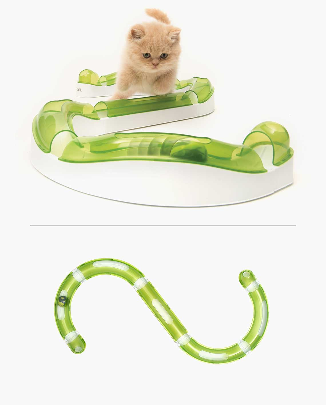 Ginger cat playing with the senses circuit