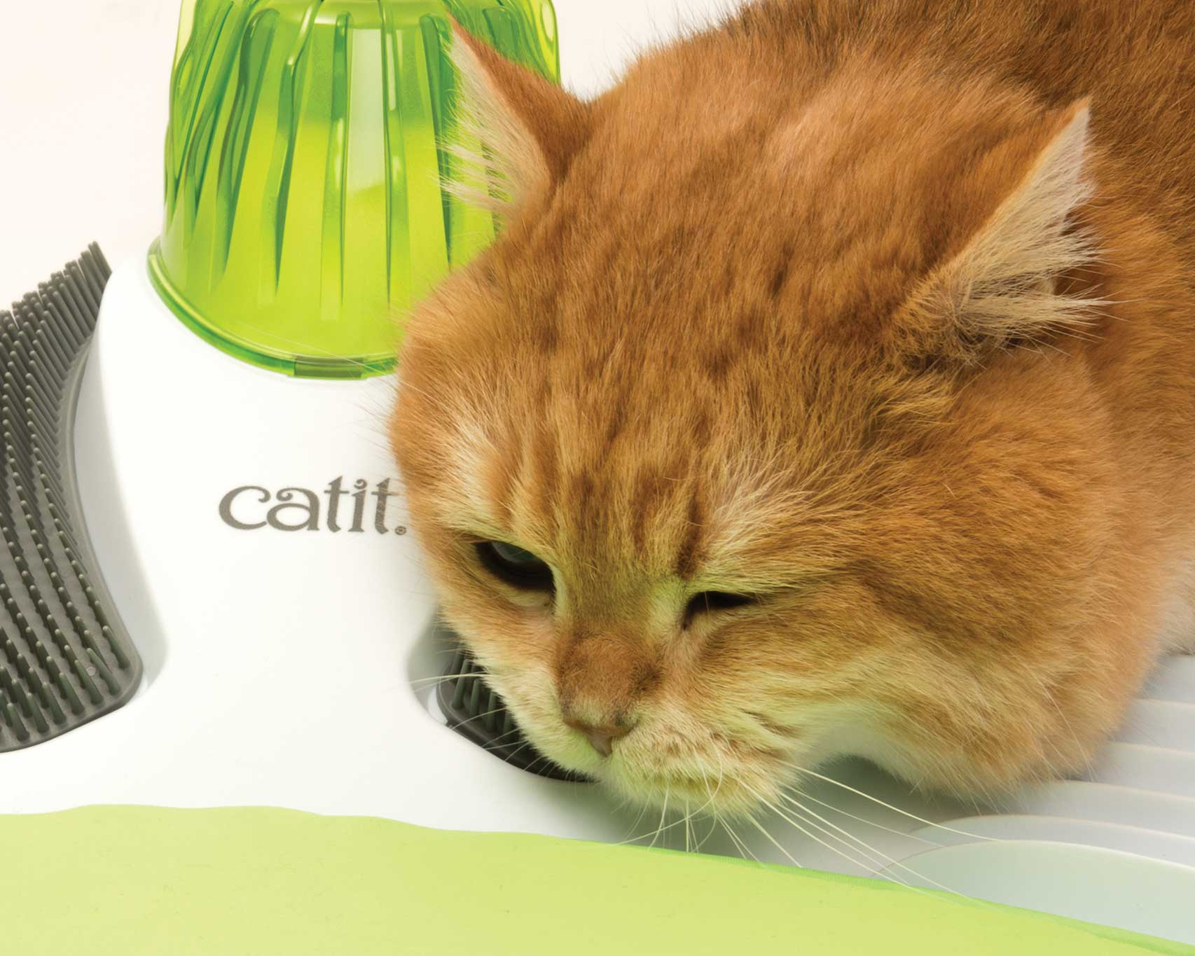 ginger cat grooming herself on the wellness kit