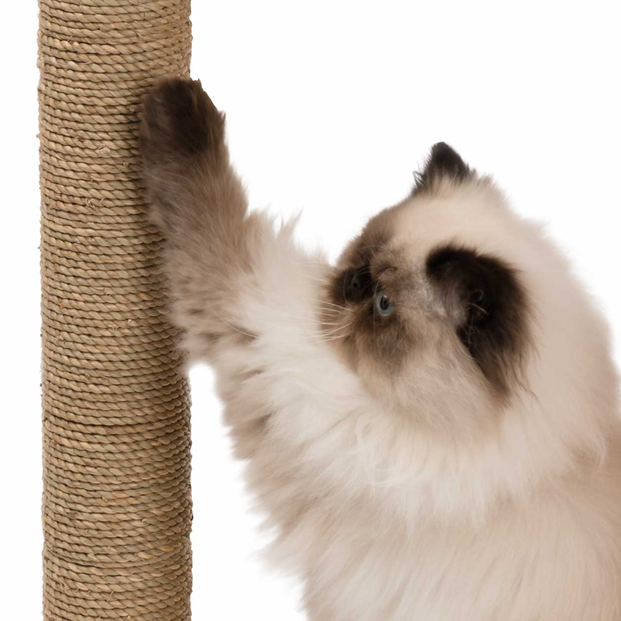 Cat scratching from a post