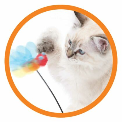 Cute kitten playing with the spinning bee framed in a circle