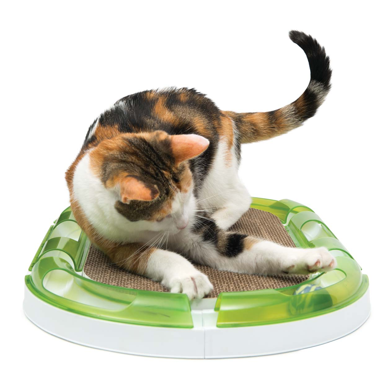 Cat playing with the Catit 2.0 oval scratcher and the Senses 2.0 circuit