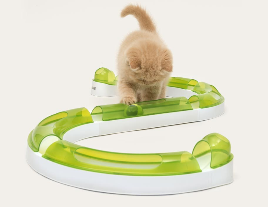 Tiny kitten playing with the senses circuit