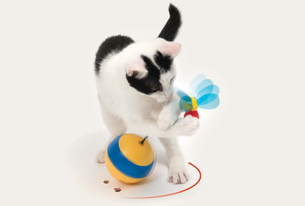Black and white cat playing with the spinning bee