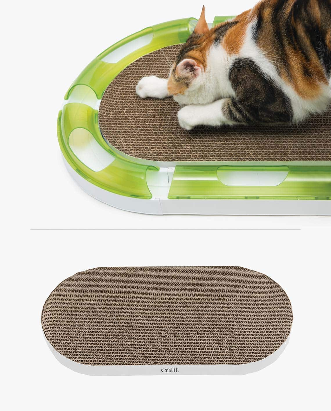 Pixi playing with the oval scratcher