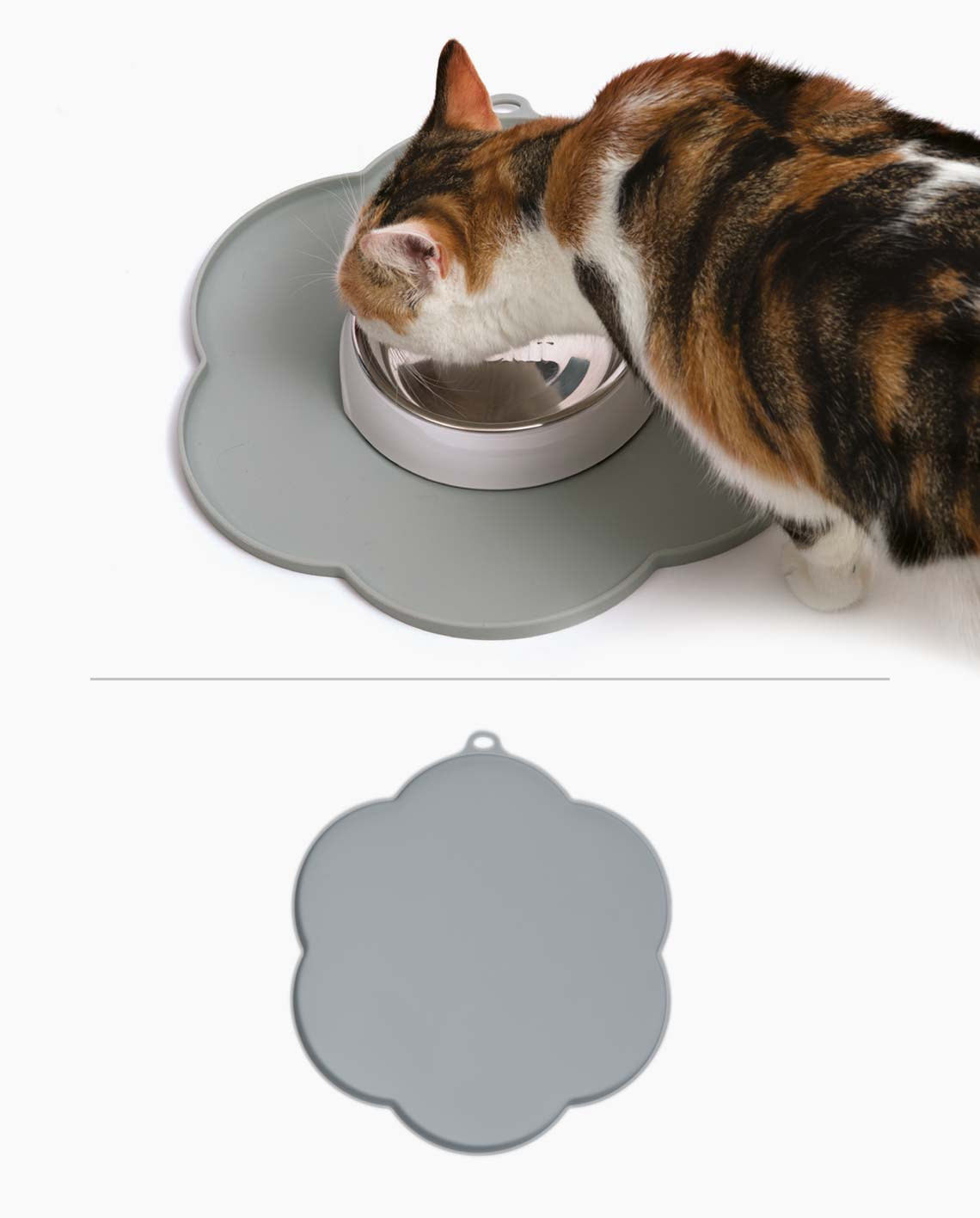 Pixi eating from a dish on a flower placemat