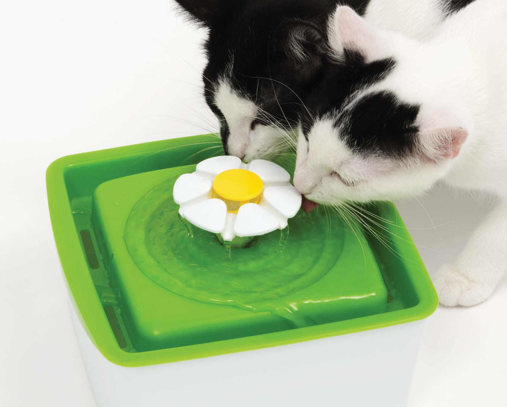 mini flower fountain with kittens