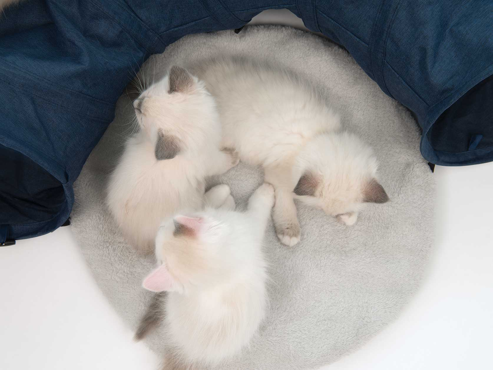 Kittens lying on the round cushion