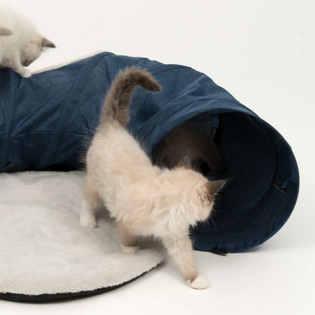 Kittens playing inside the Vesper Tunnel, a fabric cat tunnel