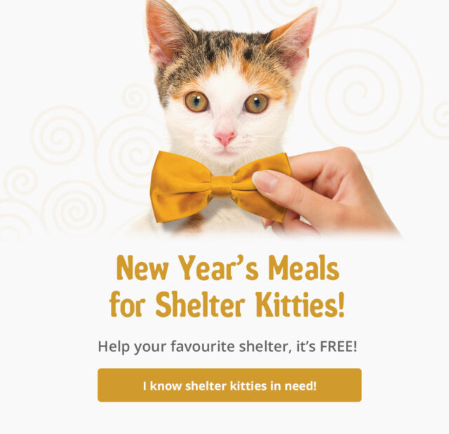 New year's meals for shelter kitties, help your favourite shelter, it's free - I know shelter kitties in need!