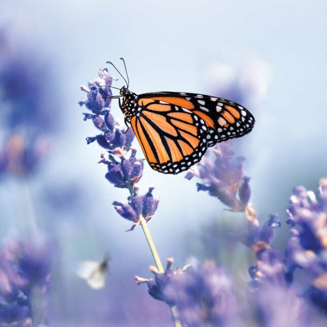 Go natural - butterfly field